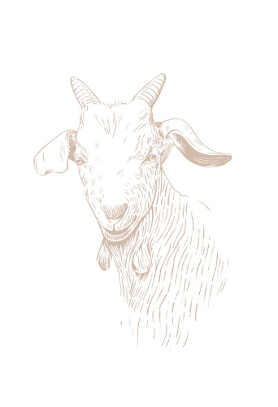 Illustration chèvre