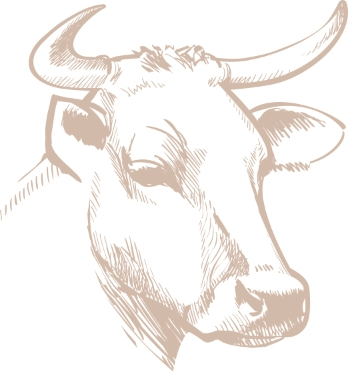 Illustration vache